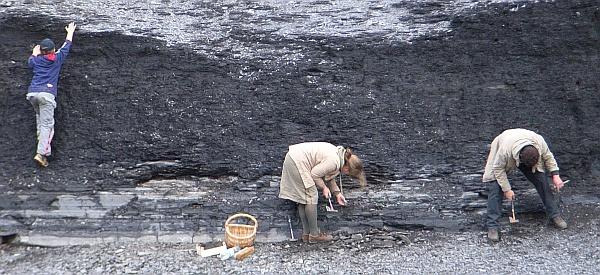 holzmaden fossilien ausgraben
