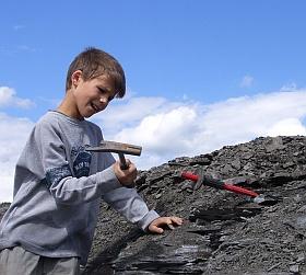 holzmaden hammer fossilien