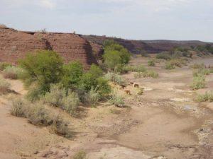 db_GEO-EXX_Namibia_017_P11305941