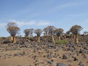 db_GEO-EXX_Namibia_018_P11306131