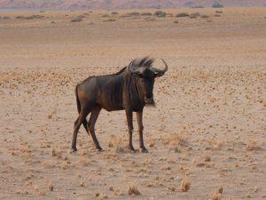 db_GEO-EXX_Namibia_096_P11509771